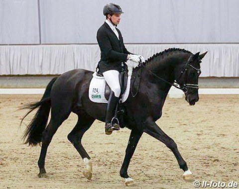 Trakehner licensing champion Perpignan Noir was recently put in training with Anabel Balkenhol but it was Philipp Kloth presenting him in Munster