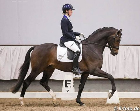 Annabel Rootveld on the British bred and Dutch owned Wedgwood (by Wild Child x Florencio)