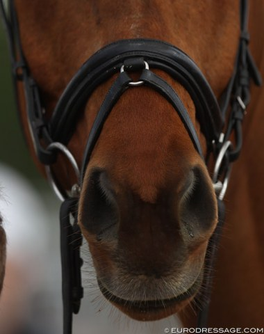 Interesting noseband