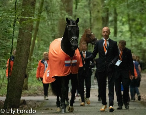 The Dutch team coming through the forest towards the para dressage arena for the trot up