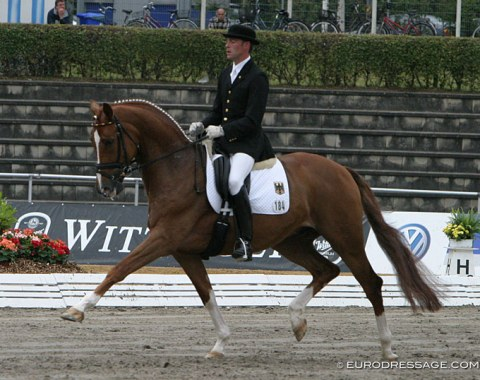Fazzino (by Florestan x Rivellino xx) - Shown in Verden by German Arnd Erben, went on to become the Under 25 horse for Belgian Julie de Deken, who won the inaugural Under 25 classes at the 2010 CDIO Aachen