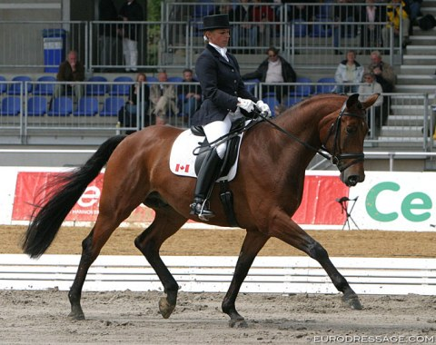 "Foto Tyme (by Florestan x Delphi) - Shown in Verden by Canadian Evi Strasser. The horse sold to Great Britain and was renamed ""Hiscox Artemis"". He became Richard Davison's 2012 Olympic Games horse. Sold to Philine von Bremen as a schoolmaster."