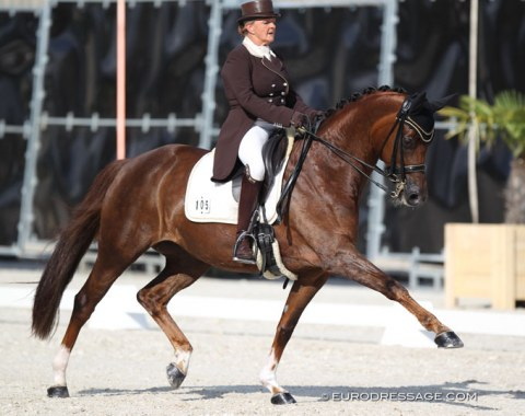 Dominique Mohimont on the mega talented Oldenburg mare Toureine du Meugon (by Donnerball x Wolkentanz II)
