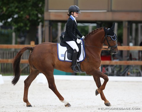 A well known face with a new rider: Flash (by Fidermark) has been competing at CDI's since 2012 (Angela Krooswijk, Charlotte Wensing) and is now the schoolmaster for Dutch based Greek rider Zoe-Petronella-Konstantina Roosen