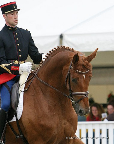 French Bertrand Lebarbier on Welfenrat (by Wolkentanz x Grafenfels) at the 2005 WCYH. The horse went on to briefly compete at national GP level. Lebarbier hasn't been seen in the CDI ring since 2013.