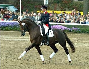 Furst Piccolo at the Warendorf State Stud stallion show