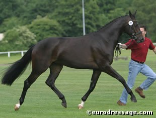 Wertvolle (by Sandro Hit x Weltmeyer), reserve champion at the 2004 Rastede Oldenburg Mare Show