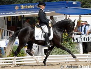 Ghost (by Going Top) and Wibke Stommel placed 3rd in the 3-year old pony stallion class:He's a very nice pony that looked like it had fun working with pleasant gaits