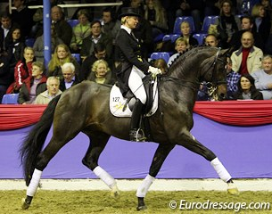Gestut Famos' Hanoverian stallion Don Marco (by Don Frederico x Pik Bube I)