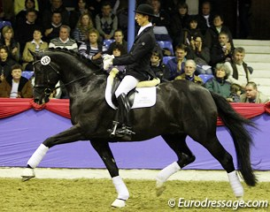 Jan Steiner on the Oldenburg reserve champion Dante Weltino (by Danone x Welt Hit II). What a fun, active stallion: super push from behind, nice in the shoulder. He could move more uphill and be more loose in the back in canter