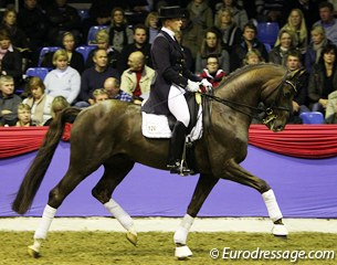 Silke Tietjen on the Swedish bred Diomedes (by Belissimo M x Flemmingh x Magini)