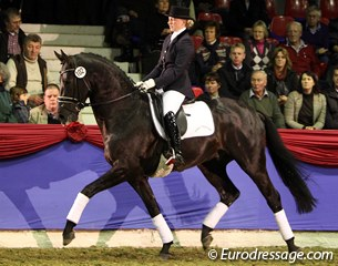 Danielle van de Groep on the double world champion Astrix, a KWPN stallion by Olivi x Obelisk. The rider was very busy in the saddle and restless with her hands which meddled with the harmony but the rideability of this stallion was excellent.