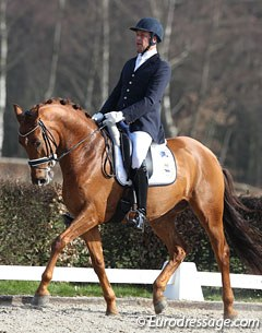 Marcel Heykamp on Captain Cooks (by Johnson x Dublin). The cute, compact chestnut gelding lacked stretch in the body and was ridden with too much collection. If he were to stretch more the total image would be much more appealing