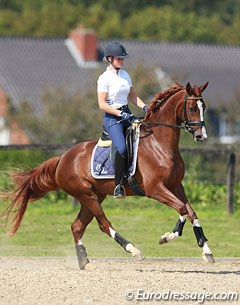 Veronique van Beukelen on Silvia Rizzo's 3-year old Westfalian mare Blickfang (by Belissimo M x Furst Piccolo)