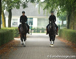 Young horses in training at Dressage Stable Van Baalen