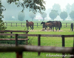 Broodmares and foals in the field