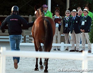 The ground jury with FEI veterinary support inspecting the horses