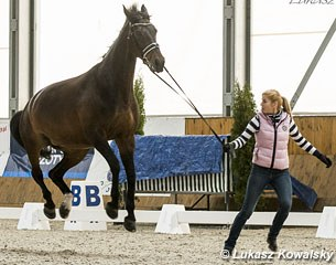 Dina Ellermann's Landy's Akvarel is a high flying bird at the horse inspection