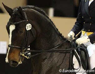 Oksana Gusarova rides Enrico in the classical 3:1 hold of reins. It used to be the norm before WW II but it is very rare in modern dressage. It is sometimes still used at the Spanish Riding School.