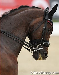 Brandtoftes Sjubell in a double bridle with a Baucher snaffle