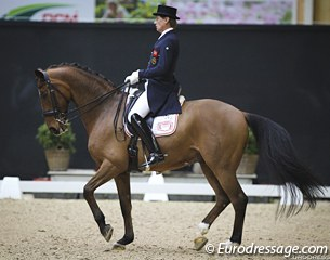 Emile Faurie's Bohemo Tinto (by De Noir x Diamond) made his international Grand Prix debut in Lier. Faurie bought the horse as a 5-year old and trained him from novice to Grand Prix