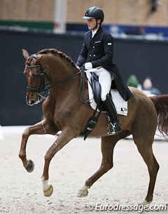 French François Jacq on the Danish warmblood Gorklintgaards Romaro (by Romanov x Don Schufro)