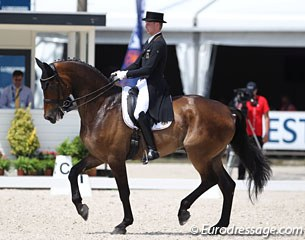 Jan Dirk Giesselmann on Real Dancer. Two horses sired by Rubin Royal competed in the 5* Grand Prix in Rotterdam. The bay gelding is a very powerful mover but struggled in all three piaffes