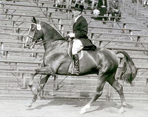 Heinrich Boldt riding Brokat in the 1950s