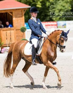 FEI Dressage Pony for Sale:: Charming Foret