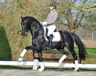 Gestüt Peterhof's Triple World YH Champion Sezuan :: Photo © Siegbert Altenhofer