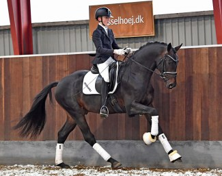 Hesselhøj Gnags (by Grand Galaxy Win x Tailormade Lancelot)