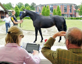 Learn everything about horse breeding on the 2018 Oldenburg Summer Meeting