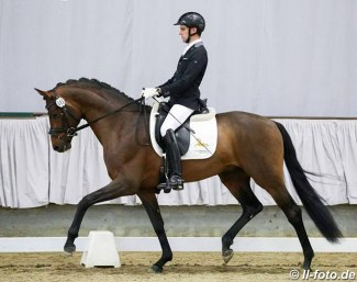 D'Alessandro (by Don Frederic x Stedinger) in the 2018 Munster Sport Test :: Photo © LL-foto