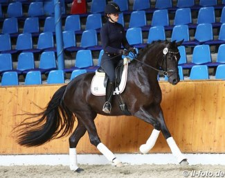 British bred, Danish owned Oldenburg mare Best of Mount St. John at the 2018 Oldenburg Mare Performance Test in Vechta :: Photo © LL-foto