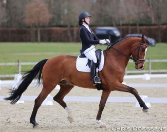 Former Belgian pony team rider Kayleigh Buelens now selected for the Belgian Young Horse Team with Fifty Ways to Victory, bred by Holly Simensen, discovered in Oldenburg by her trainer Mario van Orshaegen :: Photo © Chris Coessens