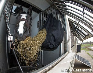 Horse in transport :: Photo © Dirk Caremans