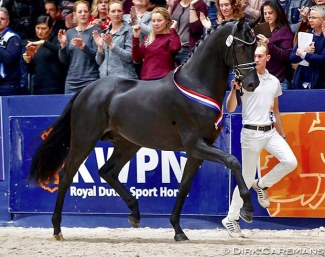 Le Formidable (by Bordeaux x Ferro x De Niro) at the pre-selection :: Photo © Dirk Caremans