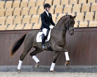 DWB stallion candidate Fruerings Saigon (by Blue Hors First Choice x Solos Landtinus) is one of the many highlights in the 2019 Danish Warmblood Spring Auction collection