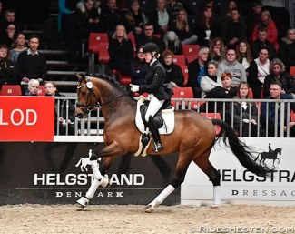Olympus (by Blue Hors Don Olymbrio x Solos Landtinus) :: Photo © Ridehesten