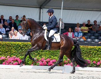 Severo Jurado Lopez and Furst William HC won the 4-year old stallion class at the 2016 World Young Horse Championships :: Photo © Digishots