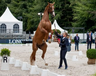 Isabell Werth's Bella Rose is up in the air at the horse inspection for the 2019 European Dressage Championships :: Photo © Lily Forado
