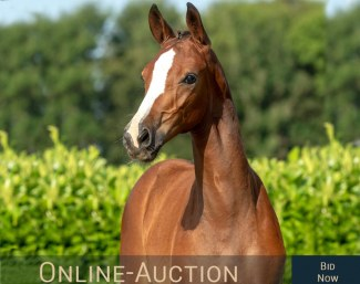 2nd Hof Thelker Online Auction