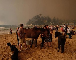 Bushfires in Australia. Owners are fleeing for safety and taking their horses to the beach :: Photo © Alex Copel