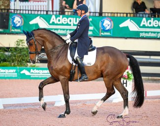 Steffen Peters and Suppenkasper at the 2020 CDI-W Wellington :: Photo © Sue Stickle