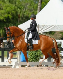 Denielle Gallaghar competing at the 2020 Global Dressage Festival :: Photo © Sue Stickle
