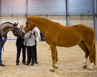 Maifleur with Joop and Maartje Hanse meeting son Valegro at the KWPN Stallion Licensing in February 2017 :: Photo © Dirk Caremans