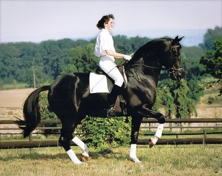 Marion Langels on Trakehner stallion Kostolany in a near perfect piaffe: on the hindquarters , the front leg is in the vertical. Clear uphill tendency, the neck wonderfully arched, poll the highest point. Everything appears elastic-supple-harmonious. One ear listens to the rider, the other perceives the surroundings :: Photo © Beate Langels