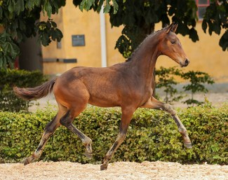 SWB Equestrian Weeks Dressage with Breeders Trophy and WB Online Elite Foal  Auction