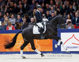 Bart Veeze and Kardieno in a stallion show at the 2019 KWPN Stallion Licensing :: Photo © Dirk Caremans