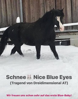 Nice Blue Eyes enjoying her retirement and in foal to Dreidimensional